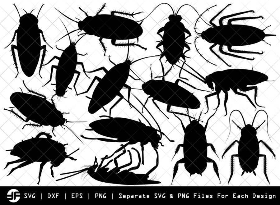Cockroach SVG   Animal SVG   Silhouette Bundle   Cut File