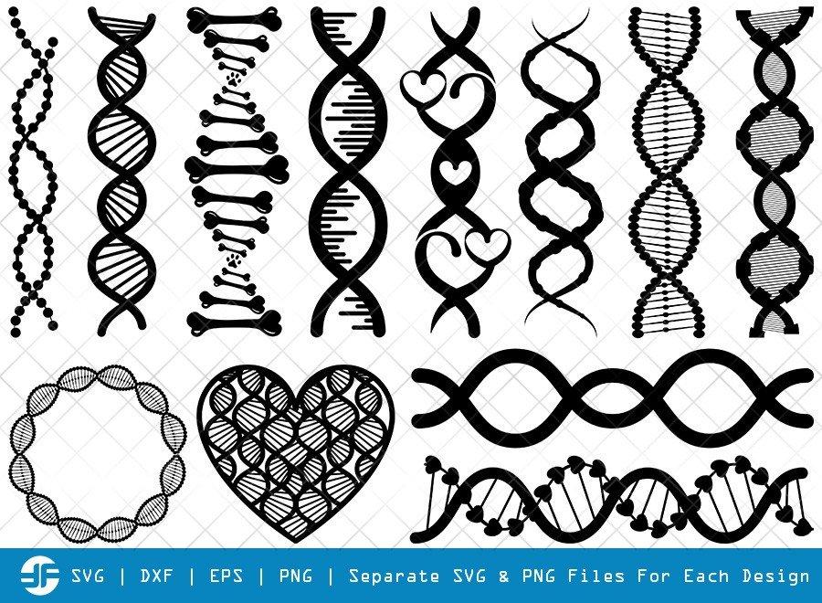 DNA SVG Cut Files | DNA Strand Silhouette Bundle