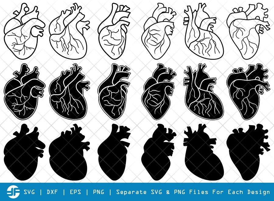 Human Heart SVG Cut Files   Anatomical Heart Silhouette